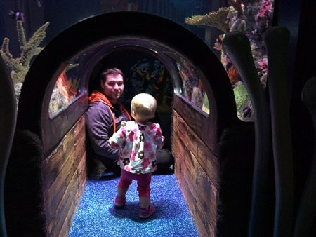 SEA Life KC fish tunnel