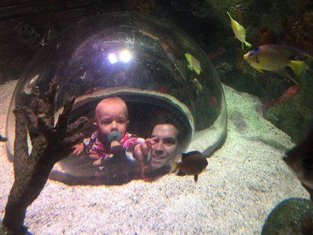 SEA LIFE Aquarium KC bubbles to see fish