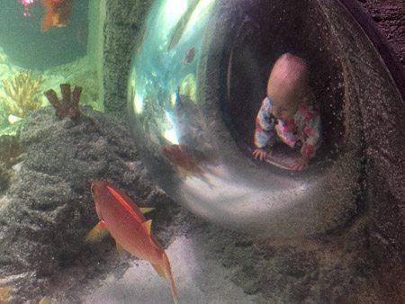 SEALIFE Aquarium KC