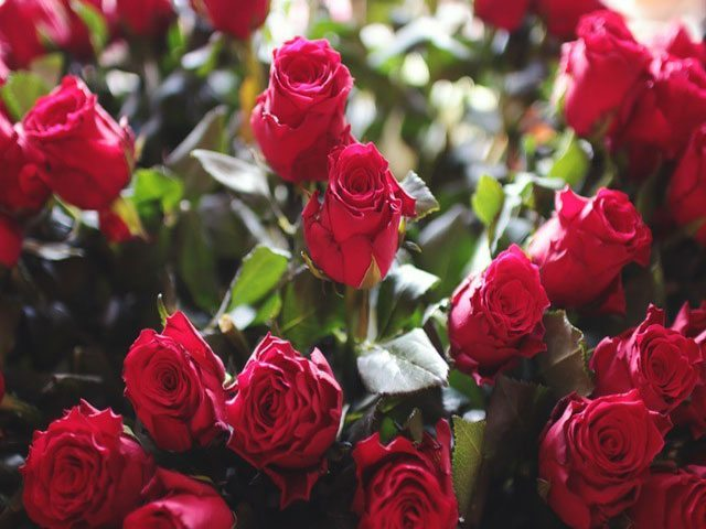 save on valentines day roses